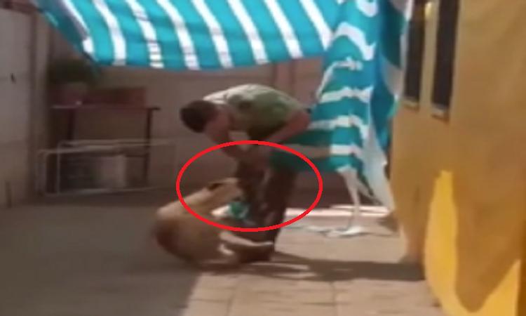 Chú chó ôm chàng cảnh sát sau khi được giải cứu -
