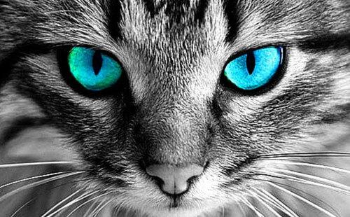 Tại sao ban đêm mắt động vật sáng xanh khi chiếu đèn?