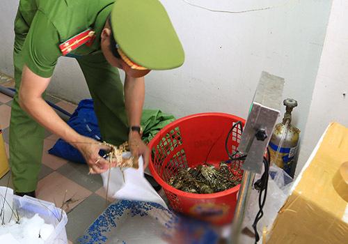 Đà Nẵng xuất hiện bơm tạp chất tăng trọng cho tôm hùm
