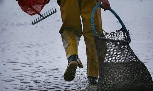 Khi đến Anh vào năm 2004, Li Hua phải làm công việc đào sò, 7 ngày mỗi tuần với thù lao ít ỏi. Ảnh: BBC.