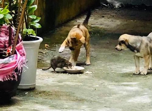 Bố mẹ cún chăm chút bữa ăn cho chuột - 2