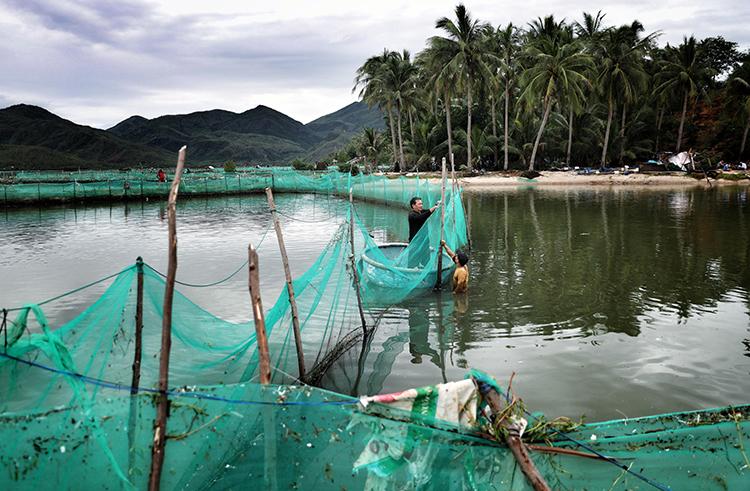 Người dân xã Xuân Hải buộc lại lưới vây, tránh số cá mú còn lại trôi đi. Ảnh:Hữu Khoa.