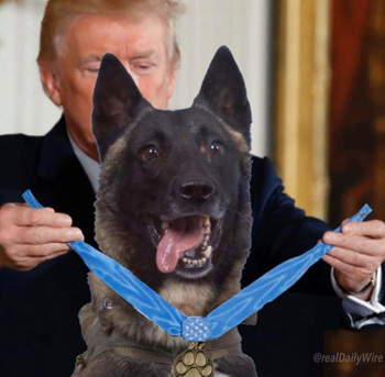 Trump chế ảnh trao huân chương cho con chó truy đuổi Baghdadi - ảnh 1