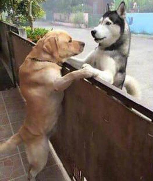 Nỗi khổ của cặp đôi cún cưng yêu xa - 1