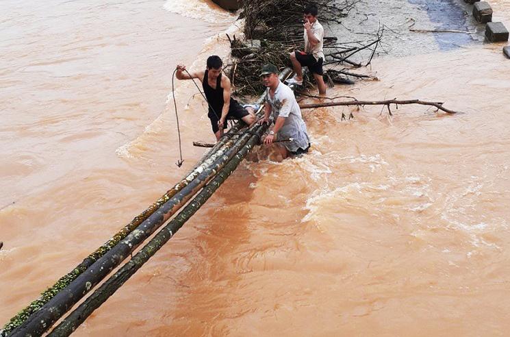 Người dân huyện An Lão dùng cây cau làm cầu tạm sau khi cầu sập. Ảnh: Trọng Lợi.