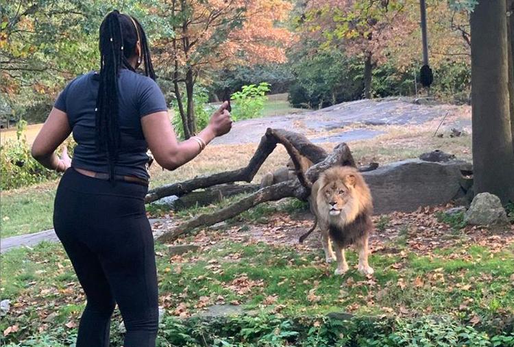 Cô gái vướng lao lý vì đột nhập chuồng sư tử - ảnh 2