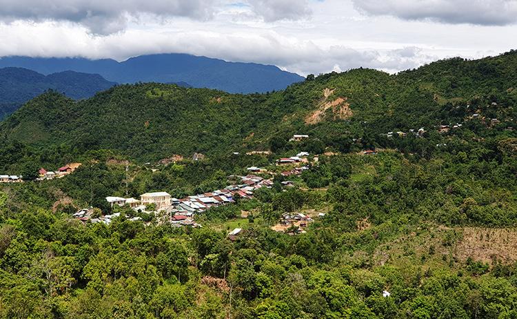 Cây quế được người dân xã Phước Thành trồng quanh vườn, phủ xanh làng mạc. Ảnh: Đắc Thành.