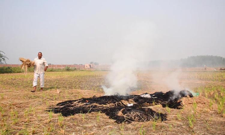 Nông dân Ấn Độ hun khói thủ đô - ảnh 2