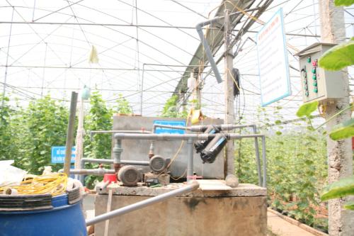 Hệ thống tưới nước của vườn dưa dược điều khiển tự động. Ảnh: Dương Lan.