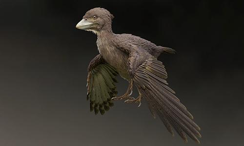 Loài chim nguyên thủy sống cùng thời khủng long