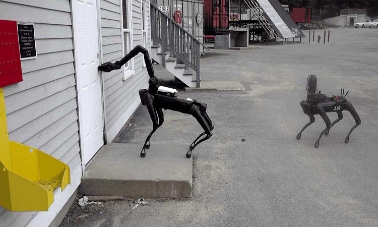 Chó Spot mở cửa bằng cánh tay robot. Ảnh: Sun.