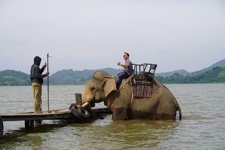 Những con voi bố mẹ đang phục vụ du lịch trên hồ Lăk. Ảnh: Trần Hóa.