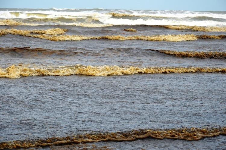Nước biển đen bất thường - ảnh 1