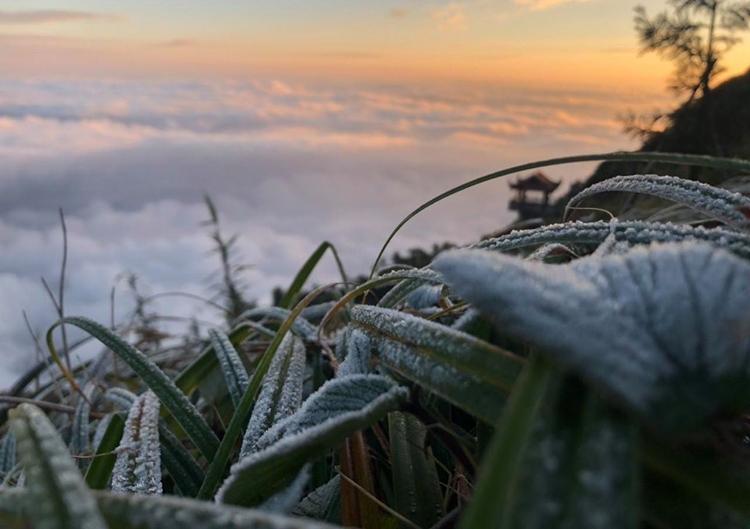 Băng bám trên cây cỏ ở đỉnh Fansipan. Ảnh: CTV
