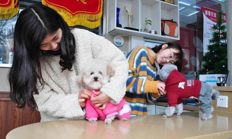 Người trẻ Trung Quốc thích nuôi chó hơn kết hôn - ảnh 1