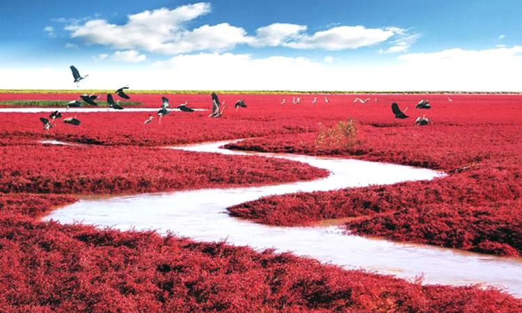 Hiện tượng tạo nên đầm lầy đỏ ở Trung Quốc -