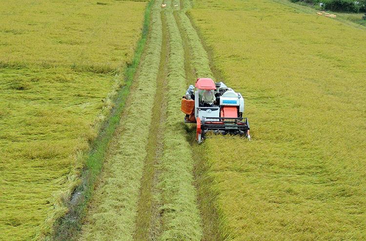 Thu hoạch lúa ở miền Tây. Ảnh: Cửu Long