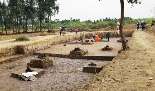 Sau khi khai quật, các nhà khảo cổ học Việt Nam tìm thấy bãi cọc lim nằm sâu dưới lớp bùn trầm tích trên cánh đồng Cao Quỳ, xã Liên Khê, huyện Thủy Nguyên (Hải Phòng) được cho là của quân dân nhà Trần đóng trên sông Đá Bạch, chống quân xâm lược Mông Nguyên. Ảnh: Giang Chinh