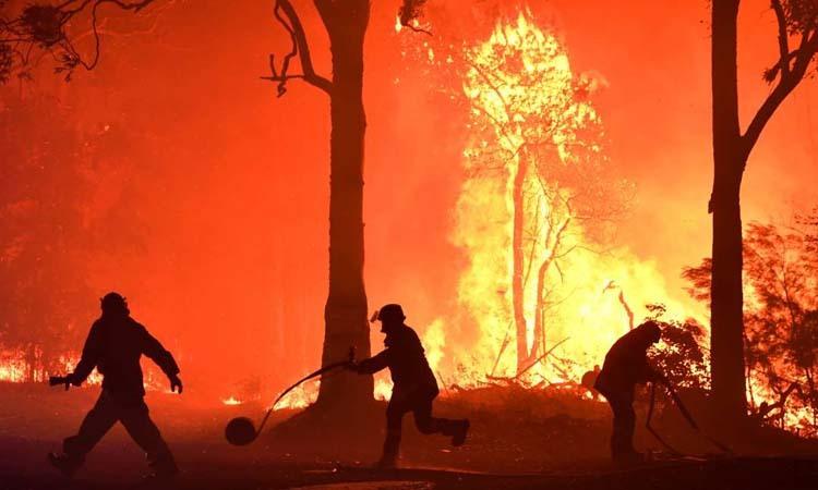 Các tình nguyện viên và lính cứu hỏa ngăn chặn cháy rừng ở gần làng Termeil, bang New South Wales, Australia hôm 3/12. Ảnh: Reuters.