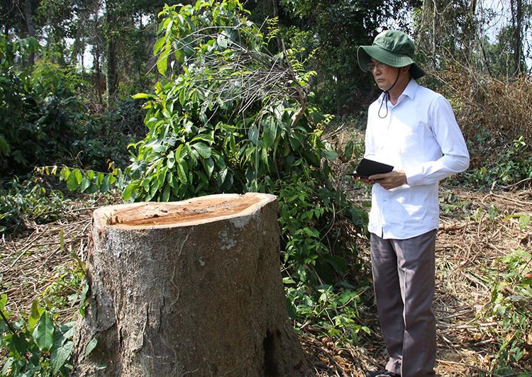 Ông Võ Văn Chánh, Phó Chủ tịch UBND tỉnh Đồng Nai một mình thị sát khu rừng bị phá. Ảnh: Phước Tuấn