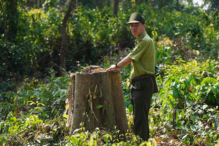 Lực lượng kiểm lâm tỉnh Đồng Nai điều tra tại khu vực rừng bị phá. Ảnh: Phước Tuấn