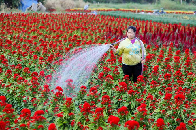 Làng hoa ở ngoại thành Sài Gòn