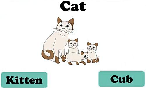 Phân biệt danh từ chỉ con vật
