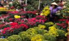Người bán hoa đẩy giá cao rồi giảm ngày 30 Tết không phải ích kỷ