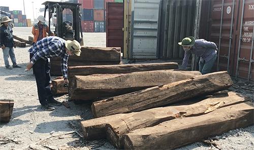 Số gỗ được giám định cho là gỗ quí không giống khai báo. Ảnh: Hải quan.
