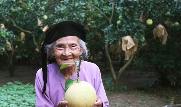 7 thập kỉ trồng bưởi đỏ xứ Đông Cao - 2