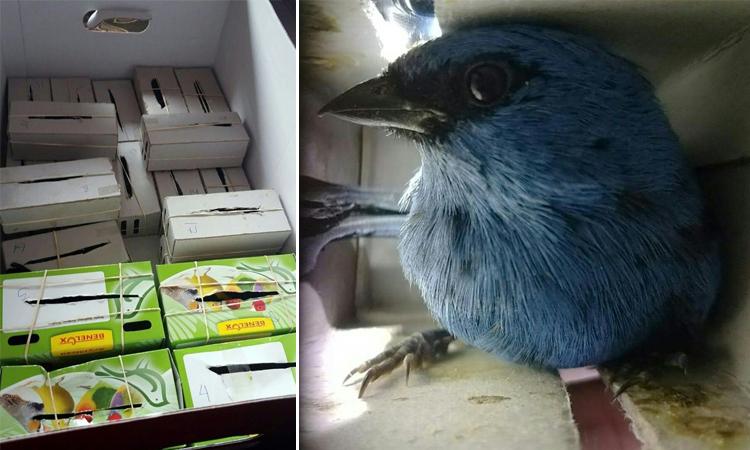 Các con vật bị nhốt trong những chiếc hộp chật hẹp giấu trong vali. Ảnh: AFP.