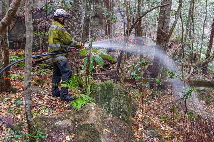 Lực lượng cứu hỏa bảo vệ rừng thông Wollemi. Ảnh: AFP.