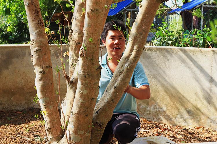 Chủ nhân bên cây có năm thân gần như đều nhau. Ảnh: Nguyễn Khoa.