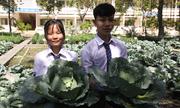 Ngôi trường trồng bắp cải, nha đam bán Tết