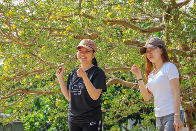 Nhiều người dân địa phương tìm tới chụp hình lưu niệm bên cây mai. Ảnh: Nguyễn Khoa.