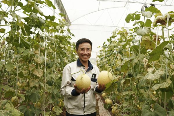 Sản lượng dưa lưới của trang trại trong năm đầu tiên đạt 60 tấn.