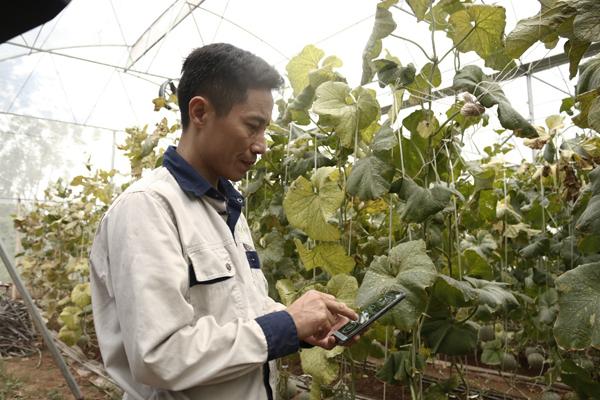 Anh Chung theo dõi tình hình cây trông thông qua điện thoại thông minh.
