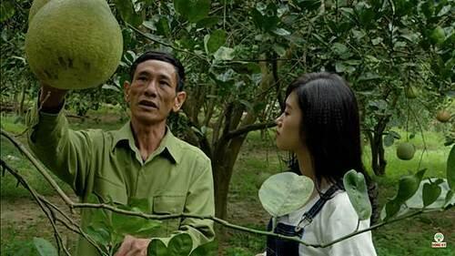 Ông Phạm Minh Mạch chia sẻ về đặc trưng của giống bưởi Sửu.