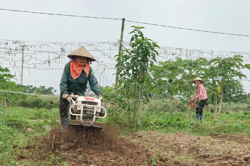 Happy farm là nông trại rau hữu cơ có diện tích khoảng 3 hecta, tại thôn Lệ Thủy, xã Trác Văn, Duy Tiên, Hà Nam. Ông Nguyễn Văn Phóng - Giám đốc Hợp tác xã Nông nghiệp xã Trác Văn làm chủ nông trại, sản phẩm chủ yếu là rau ăn lá, củ quả và dược liệu.