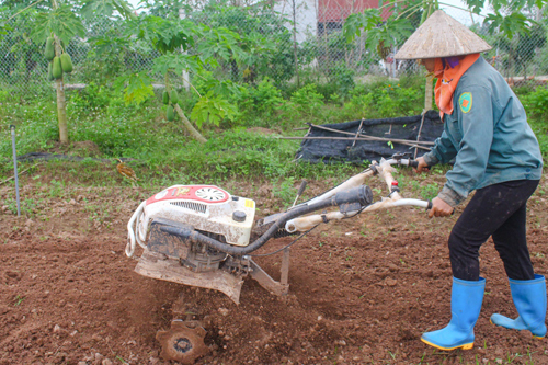 7h sáng, chị Nguyễn Thị Mai là nhóm trưởng nhận nhiệm vụ và phân công việc cho các chị em trong nhóm. Nổ chiếc máy cày đất, chị điều khiển thoăn thoắt tiến về mảnh ruộng vừa thu hoạch rau, một ngày làm việc mới bắt đầu.