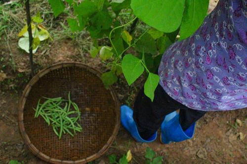 Một ngày ở nông trại rau hữu cơ hạnh phúc - 9