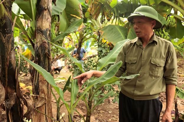 Người dân chia sẻ về cách chọn cây sừng bò.