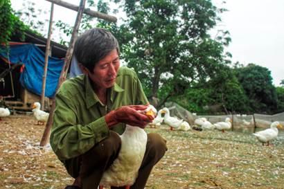 Ông Ngọc thường xuyên theo dõi đàn vịt, con nào có biểu hiện bị bệnh phải chữa trị ngay để tránh lây lan.