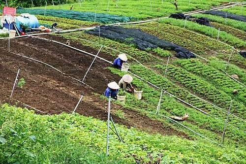 Quy trình trồng rau hữu cơ được thực hiện nghiêm ngặt từ khâu chọn giống đến thu hoạch. Các công đoạn dọn cỏ, cải tạo đất đều làm thủ công. Toàn bộ cỏ dại, tàn dư thực vật sau thu hoạch được thu gom, ngâm ủ, cho trùn quế ăn. Khu vực xử lý tàn dư thực vật và làm phân hữu cơ bố trí riêng cách ly với khu trồng trọt, có diện tích hơn 2000m2.