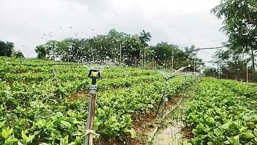 Tận dụng nguồn nước tinh khiết từ núi Vua Bà chảy quanh năm, chị Hoa dẫn 5km nước qua các bể lọc trên cao và bể con (tổng dung tích 2000m3), đồng thời sử dụng hệ thống tưới phun, tưới nhỏ giọt theo công nghệ tiên tiến trên 100% diện tích vườn.