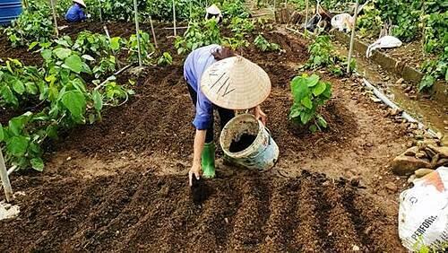 Công nhân tại trang trạităng chất lượng, độ phì của đất bằng áp dụng biện pháp quản lý canh tác trồng trọt, trồng cây họ đậu để tận dụng khả năng cố định đạm. Bên cạnh đó, trang trại kết hợp sử dụng bón phân trùn quế do trang trại trực tiếp sản xuất và nước đậu tương ngâm ủ.