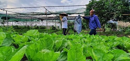 Nông trại rau hữu cơ rộng 60ha - 9