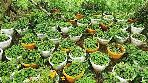 Nông trại rau hữu cơ rộng 60ha - 10