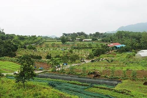 Triết lý làm nông từ mô hình rau hữu cơ lớn nhất miền Bắc