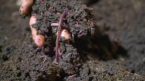 Triết lý làm nông từ mô hình rau hữu cơ lớn nhất miền Bắc - 1
